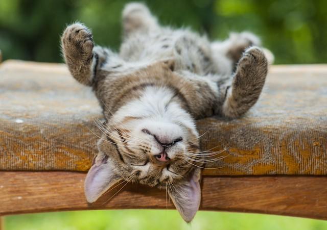avspenningsøvelser sovende katt