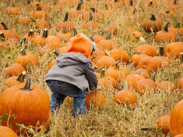 økologisk mat øker fertiliteten