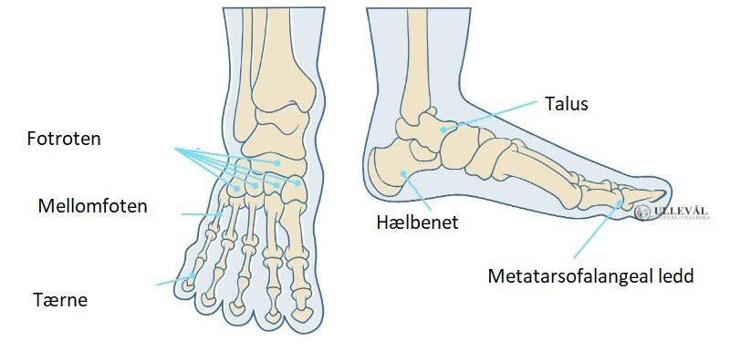 illustrasjon av fotens anatomi